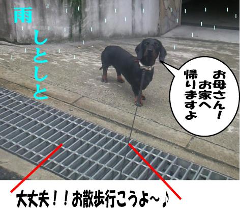 5_20090622235451.jpg