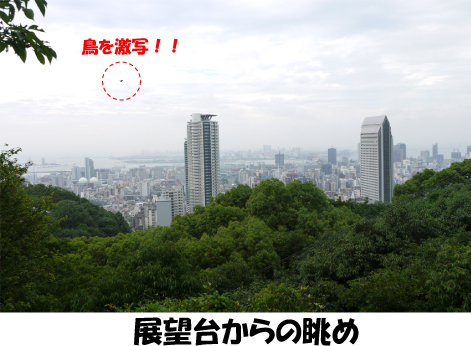 5_20090720222932.jpg
