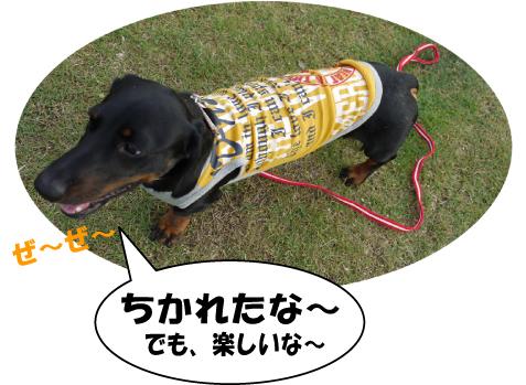 5_20090721225911.jpg