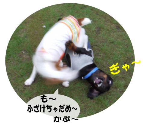5_20090723004812.jpg
