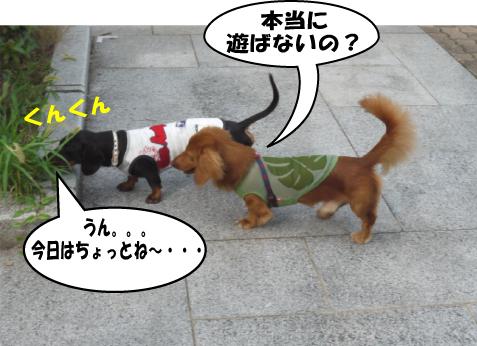 5_20090725010318.jpg