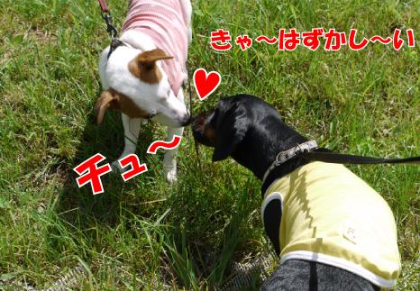 5_20090816144959.jpg