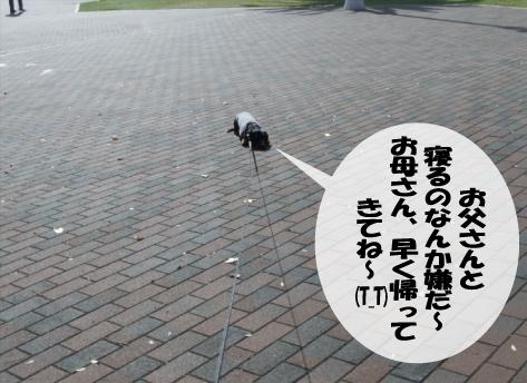 5_20091116013532.jpg