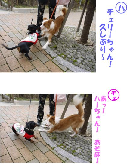 5_20091122135702.jpg