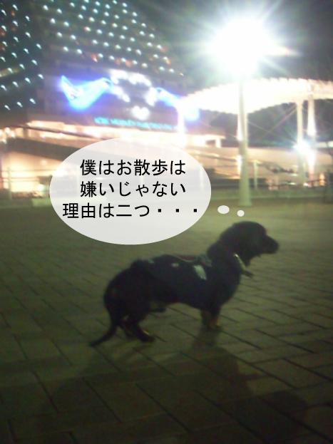 5_20100119233240.jpg