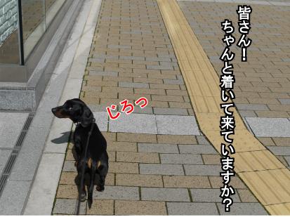 6_20090316233919.jpg