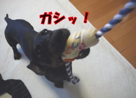 6_20090521231633.jpg