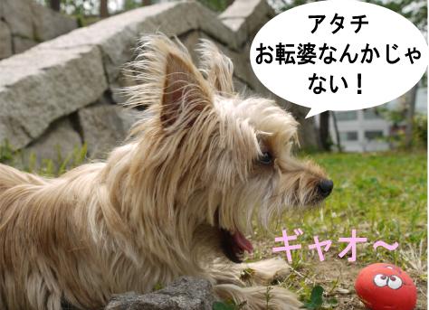 6_20090527133511.jpg