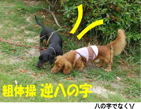 6_20090604175008.jpg