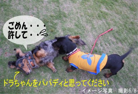 6_20090609170854.jpg