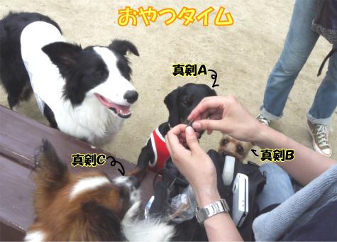 6_20090720223250.jpg