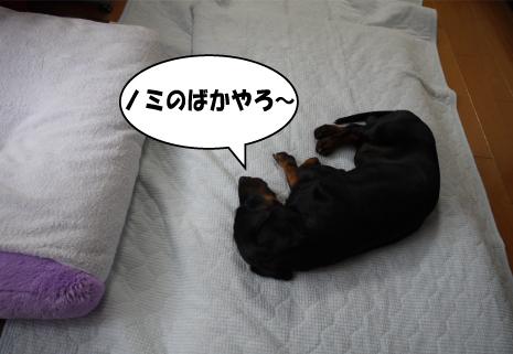 6_20090722001043.jpg