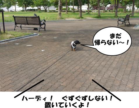 6_20090725012858.jpg