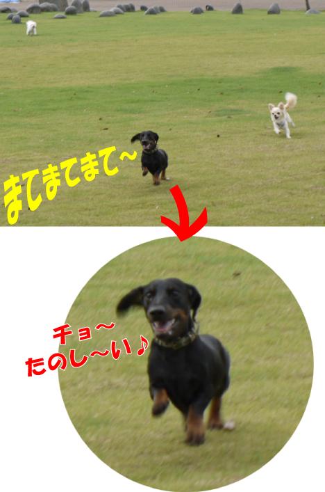 6_20090801162047.jpg