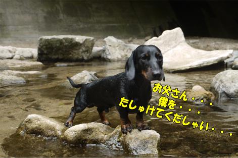 6_20090904143051.jpg