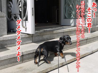 7_20090316234113.jpg