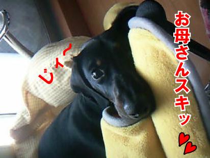 7_20090319110011.jpg