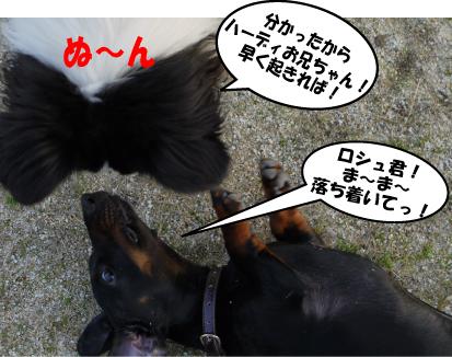 7_20090322030840.jpg