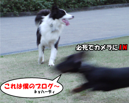7_20090327004144.jpg
