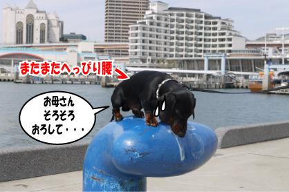 7_20090328223634.jpg