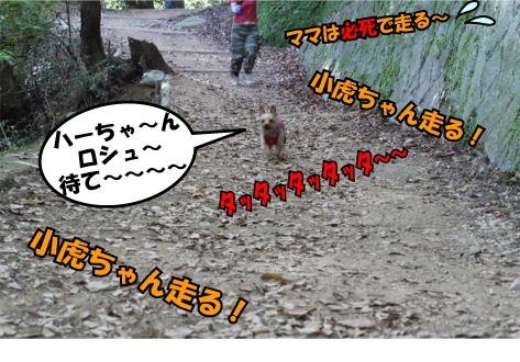 7_20090505131115.jpg