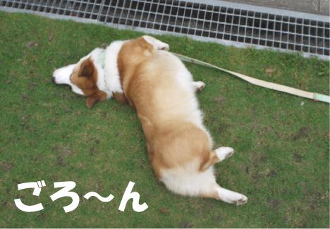7_20090523231101.jpg