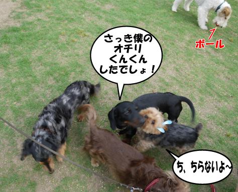 7_20090530161643.jpg