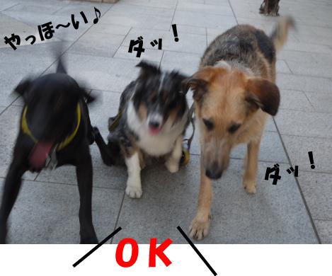 7_20090603145345.jpg
