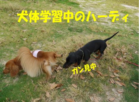 7_20090604175114.jpg