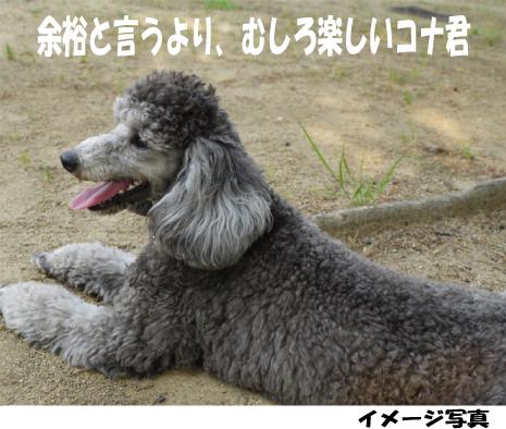 7_20090615212758.jpg