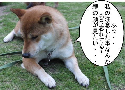 7_20090617004538.jpg