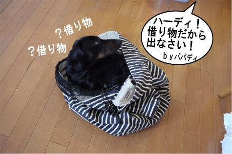 7_20090704142921.jpg