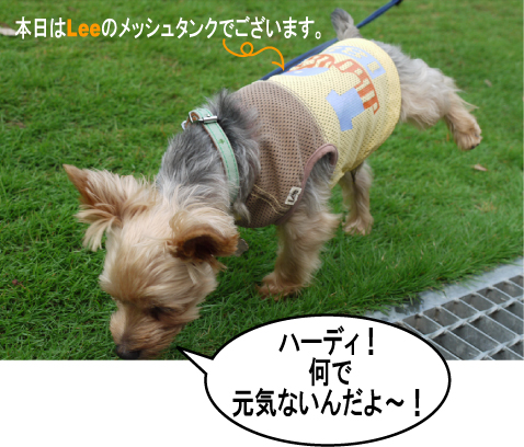 7_20090707200408.jpg