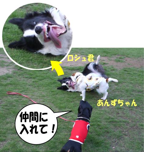 7_20090714143315.jpg