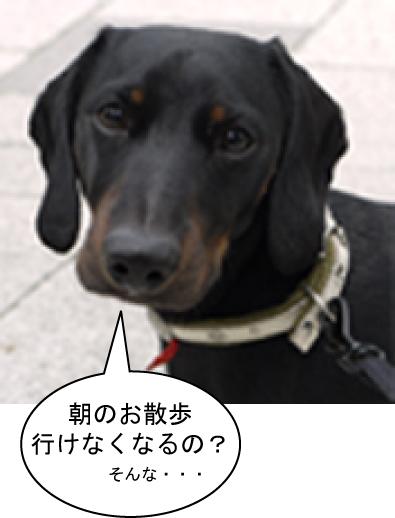 7_20090731104210.jpg