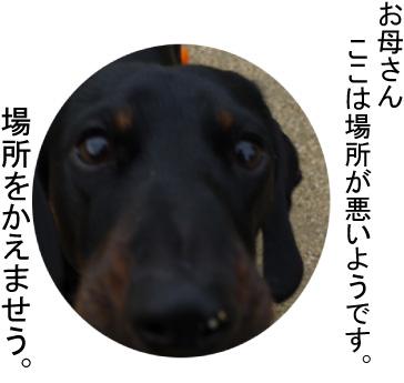 8_20090307215651.jpg
