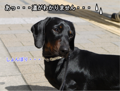 8_20090316234305.jpg
