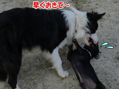 8_20090322030935.jpg