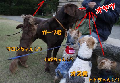 8_20090327004703.jpg