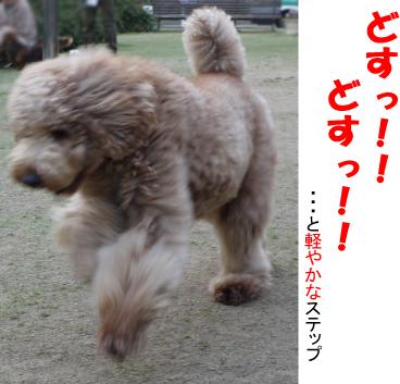 8_20090331013727.jpg