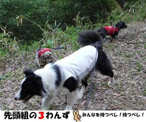 8_20090505131511.jpg