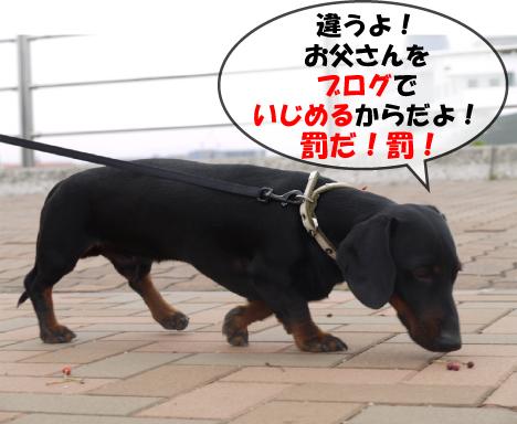 8_20090526125716.jpg