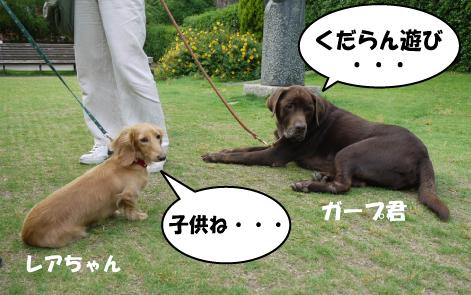 8_20090530161949.jpg