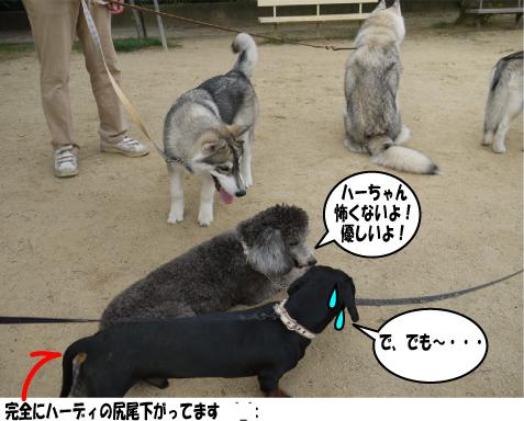 8_20090615213033.jpg