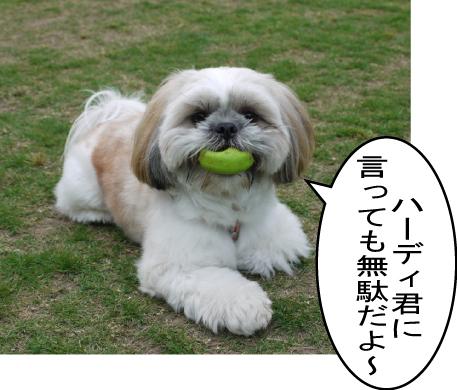 8_20090617004655.jpg