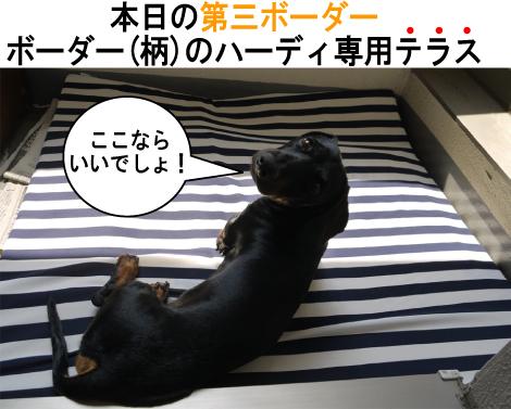 8_20090704144053.jpg