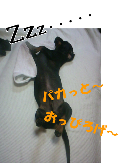 8_20090711232043.jpg