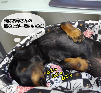 8_20091122143941.jpg
