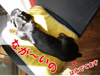 9_20090319111640.jpg