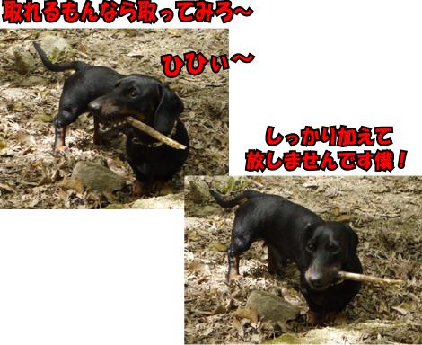 9_20090414114738.jpg